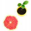 Stock Photo: Grape-fruit section and sprout
