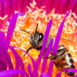 Macro of a bee in a flower - Foto de Stock  