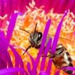 Macro of a bee in a flower - ストック写真