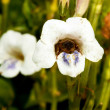 Macro of a bee in a flower — Stock Photo #3015542