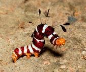 Macro of colourful worm — Stock Photo