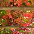 Stock Photo: Grape leave veranda roof