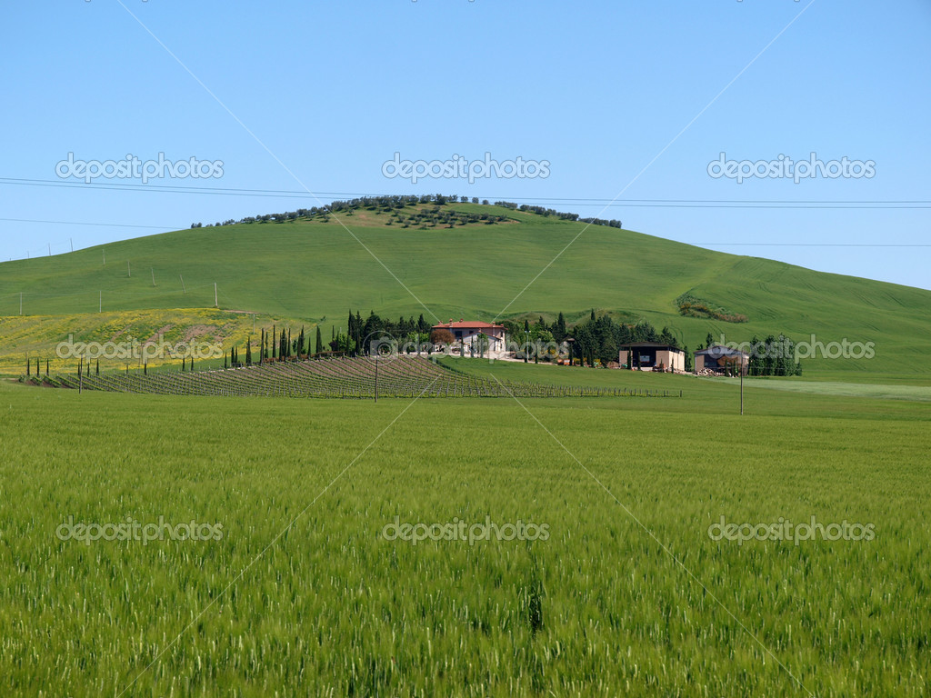 The landscape of the Val d Orcia — Stock Photo #3468414