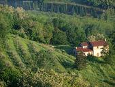 Villa in Tuscany amongst olive groves — Stock Photo