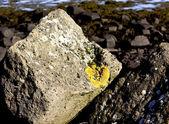 Stone — Stock Photo