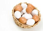 卵 — ストック写真
