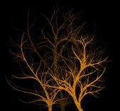 Spooky Trees — Stock Photo