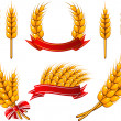 Collection of design elements. Wheat — 图库矢量图片