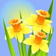 Bouquet of daffodils on a blue backgroun — Stock Vector