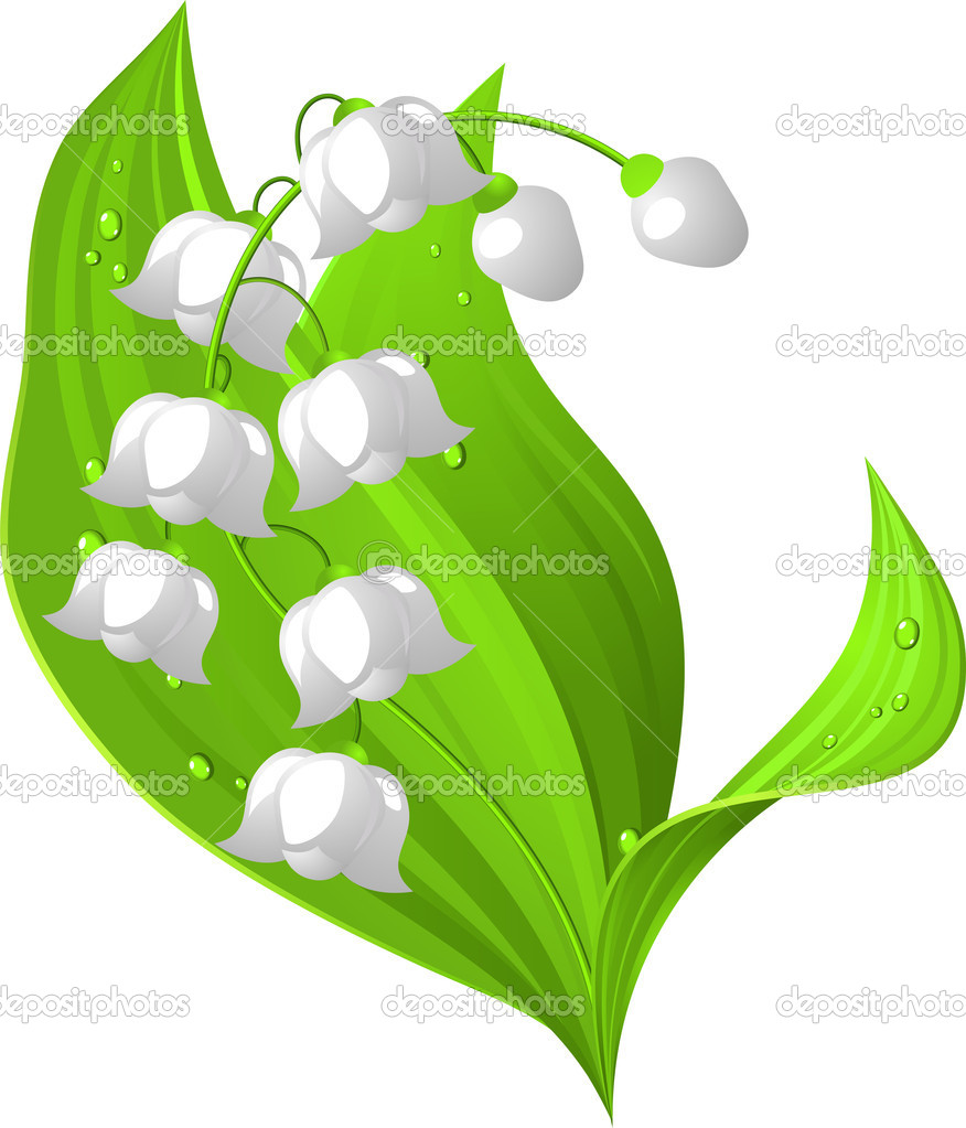 Lily of the valley. Vector illustration. Isolated. EPS 8, AI, JPEG — Stock Vector #2866768