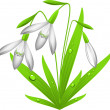 Snowdrop — Stock Vector