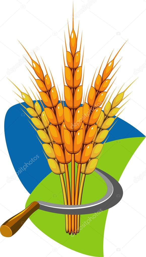 Sheaf of wheat and sickle. Vector illustration. EPS 8, AI, JPEG  Stock Vector #3051143