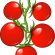 Tomatoes on a branch — Imagen vectorial
