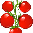Tomatoes on a branch — Stock Vector