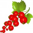 Redcurrant — Stock Vector