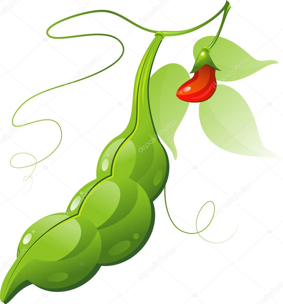 Bean Pod — Stock Vector © jara3000 #3581748
