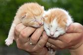 Ładny koty — Zdjęcie stockowe