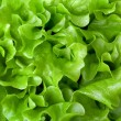 Stock Photo: Fresh lettuce close-up