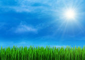 Spring grass and blue sky — Stock Photo