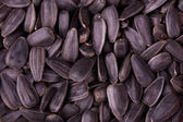 Closeup of sunflower kernels — Stock Photo