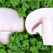 Mushroom half on fresh green cress — Stock Photo