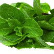 Fresh green mint — Stock Photo
