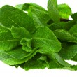 Fresh green mint - Stock Photo