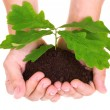 Concept of a young oak tree in woman hands — Stock Photo #3380592