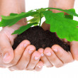 Concept of a young oak tree in woman hands - Stock Photo