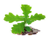 Concept of a young oak-tree and coins — Stock Photo