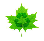 Recycle symbol over green maple leaf — Stock Photo
