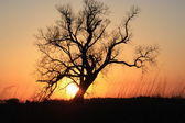 Tree Sunset Silhouette — Stock Photo
