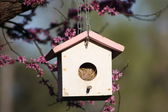Spring Time Close up Bird House — Stock Photo