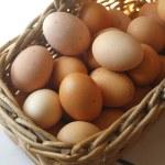 Egg — Stock Photo