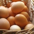 Egg — Stock Photo #3361124