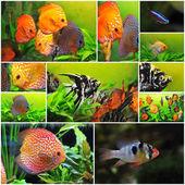 Grupp av fiskar — Stockfoto