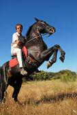 Rearing stallion — Stok fotoğraf