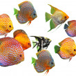 Group of fishes — Stock Photo