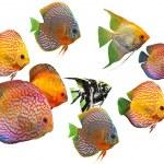 Gruppe der Fische — Stockfoto