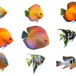 Fishes — Foto Stock