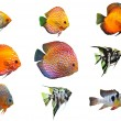 Stock Photo: Fishes