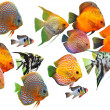 Stock Photo: Group of fishes