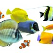 Group of fishes — Stockfoto