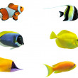 Tropical fish — Stock Photo #3440190