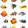 Fishes — Stock Photo #3440211