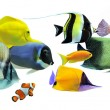 Group of fishes - Lizenzfreies Foto