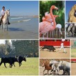 Camargue — Stock Photo