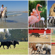 Stock Photo: Camargue