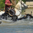 Bull and horses in water — Stock Photo