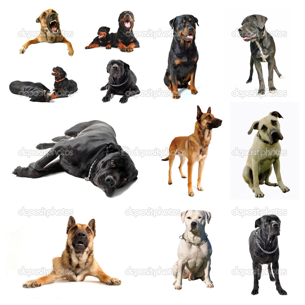 Which Are The Best Dogs To Buy